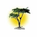 Cypress Search, Llc